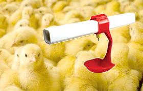 นิปเปิ้ลอุปกรณ์เลี้ยงไก่